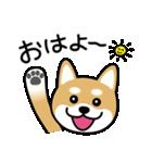Cute! 柴犬スタンプ(個別スタンプ:01)
