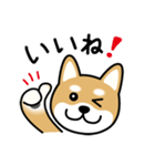 Cute! 柴犬スタンプ(個別スタンプ:08)