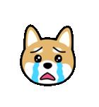 Cute! 柴犬スタンプ(個別スタンプ:23)
