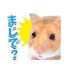 ハム★スタ(個別スタンプ:04)