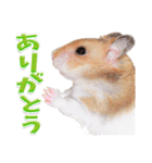 ハム★スタ(個別スタンプ:05)