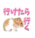 ハム★スタ(個別スタンプ:09)