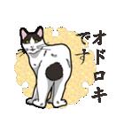 和ごころ(個別スタンプ:16)