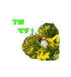 羊毛フェルトのトリちゃんシリーズ 1(個別スタンプ:4)