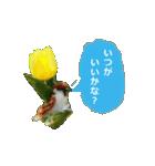 羊毛フェルトのトリちゃんシリーズ 1(個別スタンプ:6)