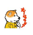 秋田犬LOVE(個別スタンプ:16)