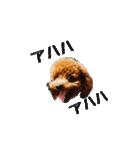 トイプーミミの写真スタンプ(個別スタンプ:21)