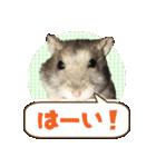 ハムスターのハム太 ☆Photo ver.1☆(個別スタンプ:2)