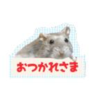 ハムスターのハム太 ☆Photo ver.1☆(個別スタンプ:3)