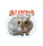 ハムスターのハム太 ☆Photo ver.1☆(個別スタンプ:4)