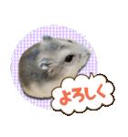 ハムスターのハム太 ☆Photo ver.1☆(個別スタンプ:13)