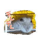 ハムスターのハム太 ☆Photo ver.1☆(個別スタンプ:15)