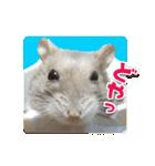 ハムスターのハム太 ☆Photo ver.1☆(個別スタンプ:16)