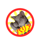 ねこ印2(個別スタンプ:05)