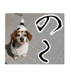 ラーコ&ラーク ver.0(個別スタンプ:3)