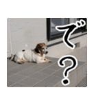 ラーコ&ラーク ver.0(個別スタンプ:4)