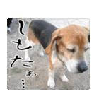 ラーコ&ラーク ver.0(個別スタンプ:13)