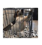 ラーコ&ラーク ver.0(個別スタンプ:35)