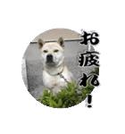 ポッちゃんポチポチ(個別スタンプ:3)