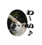 ポッちゃんポチポチ(個別スタンプ:4)