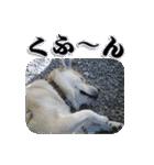 ポッちゃんポチポチ(個別スタンプ:5)