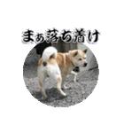 ポッちゃんポチポチ(個別スタンプ:15)