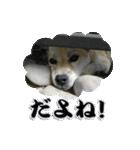 ポッちゃんポチポチ(個別スタンプ:22)
