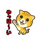 動く!トラにゃん(個別スタンプ:3)