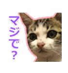 うちのお嬢♡(個別スタンプ:3)