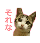 うちのお嬢♡(個別スタンプ:6)