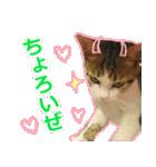 うちのお嬢♡(個別スタンプ:12)