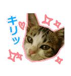 うちのお嬢♡(個別スタンプ:15)