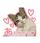 うちのお嬢♡(個別スタンプ:16)