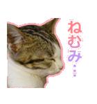 うちのお嬢♡(個別スタンプ:17)