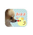ぽめまるくん4~実写版~(個別スタンプ:01)