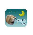 ぽめまるくん4~実写版~(個別スタンプ:03)