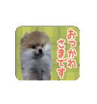 ぽめまるくん4~実写版~(個別スタンプ:05)