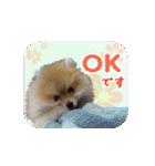 ぽめまるくん4~実写版~(個別スタンプ:06)