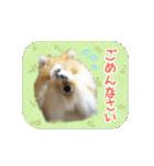ぽめまるくん4~実写版~(個別スタンプ:09)