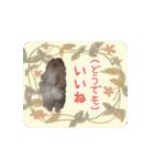 ぽめまるくん4~実写版~(個別スタンプ:10)