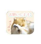 ぽめまるくん4~実写版~(個別スタンプ:16)