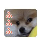 ぽめまるくん4~実写版~(個別スタンプ:17)