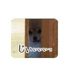 ぽめまるくん4~実写版~(個別スタンプ:21)