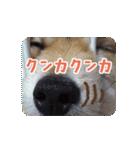 ぽめまるくん4~実写版~(個別スタンプ:23)