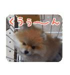 ぽめまるくん4~実写版~(個別スタンプ:24)