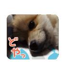ぽめまるくん4~実写版~(個別スタンプ:25)