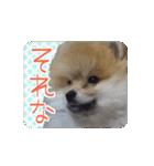 ぽめまるくん4~実写版~(個別スタンプ:26)