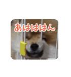 ぽめまるくん4~実写版~(個別スタンプ:28)