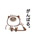乾いた目をしている猫(個別スタンプ:3)