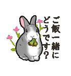 もふもふウサギ 2(個別スタンプ:1)